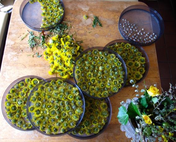 Verarbeitung von Heilpflanzen